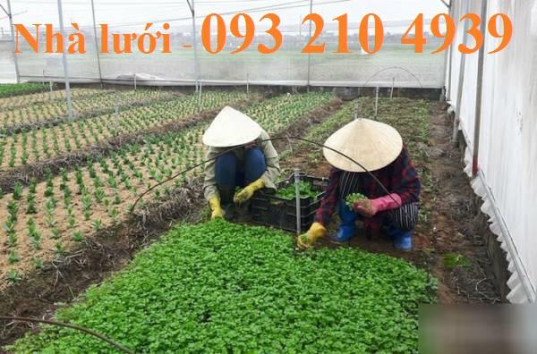 Nhà lưới trồng rau hiện đại